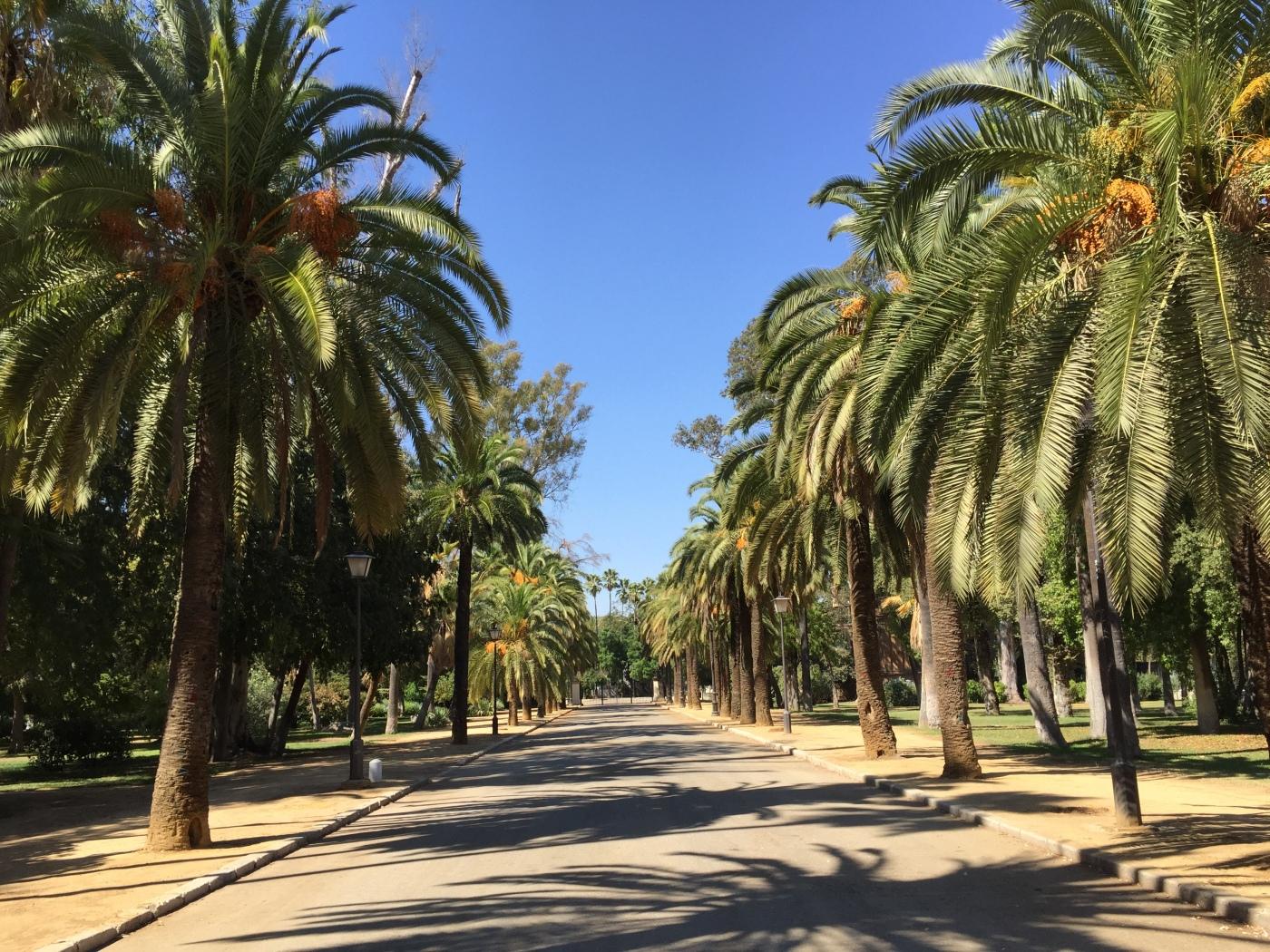 PHOTO 2 Seville Spain