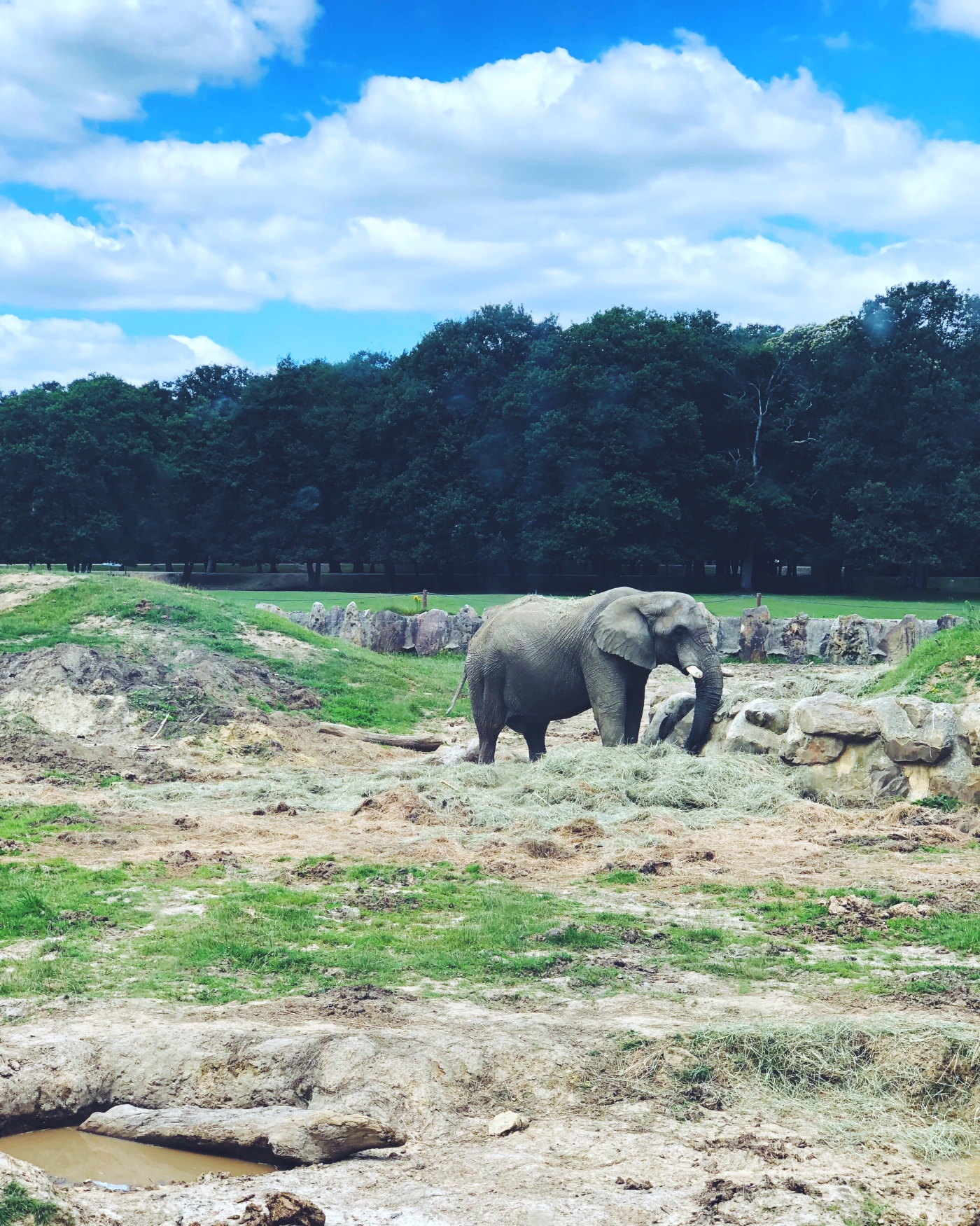 alt-zoo-thoiry-safari-elephant