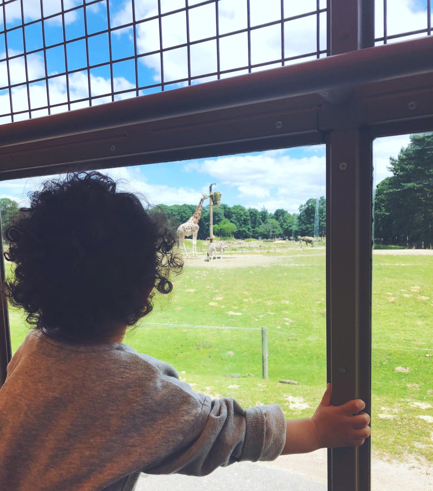 alt-zoo-thoiry-safari-avec-enfants