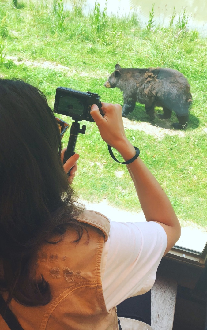 alt-zoo-thoiry-safari-ours